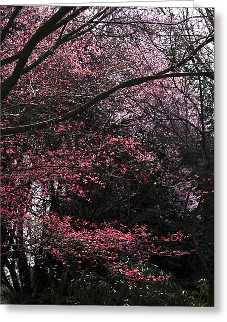 2009 Digital Art Greeting Cards - Pink Trees Greeting Card by Craig Perry-Ollila
