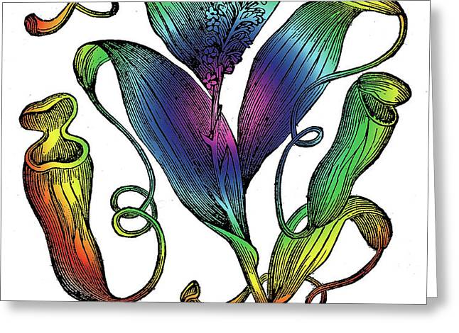Pitcher Plant Greeting Card by Eric Edelman