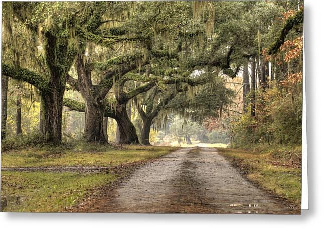 Live Oak Trees Greeting Cards - Plantation Drive Live Oaks  Greeting Card by Dustin K Ryan