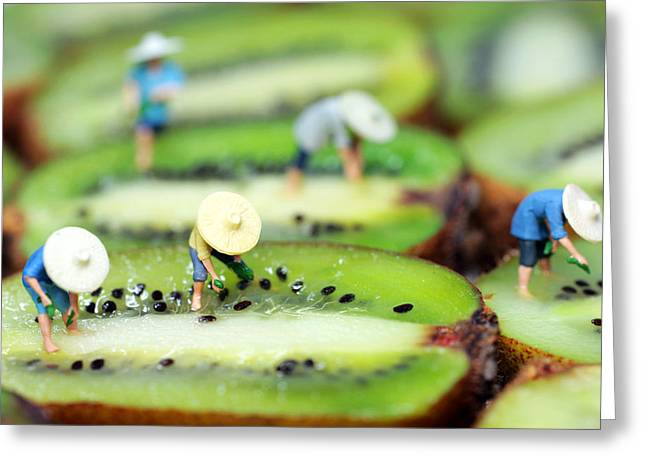 Planting Rice On Kiwifruit Greeting Card by Paul Ge