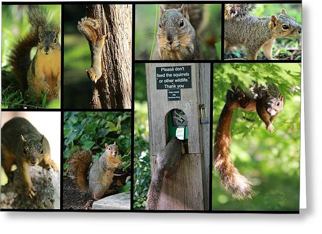 Eastern Fox Squirrel Greeting Cards - Please Dont Feed The Squirrels Greeting Card by Elizabeth Hart