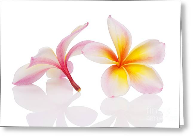 Flores Greeting Cards - Plumeria or Leelawadee Greeting Card by Atiketta Sangasaeng