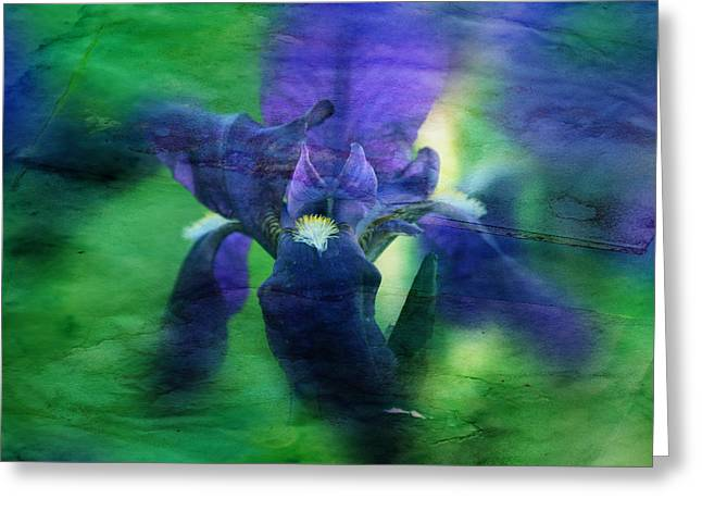 Floral Photographs Greeting Cards - Poetic Iris Greeting Card by Toni Hopper