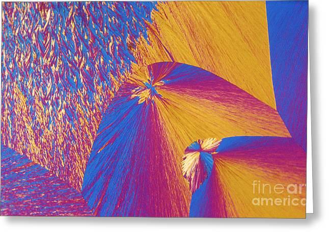 Polymer Greeting Cards - Polypropylene Greeting Card by Michael W. Davidson