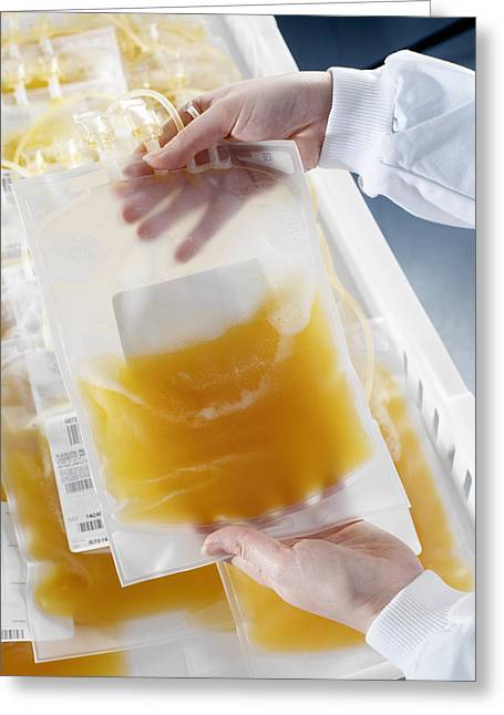 Platelet Greeting Cards - Pooled Blood Platelets Greeting Card by Tek Image