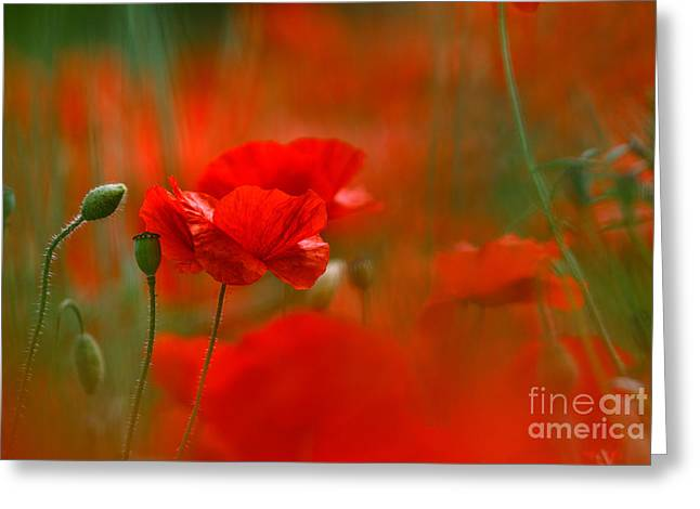 Blossoming Greeting Cards - Poppy Flowers 02 Greeting Card by Nailia Schwarz