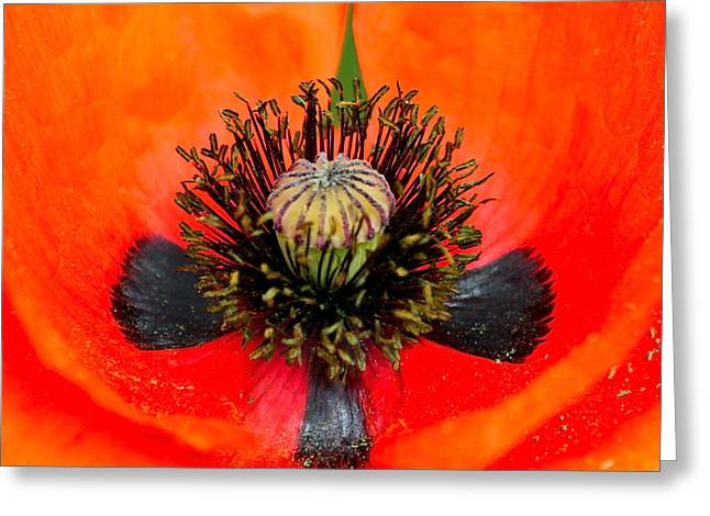 Poppy Heart Greeting Card by Karon Melillo DeVega