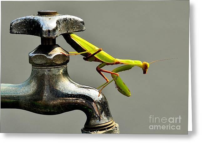 Faucet Greeting Cards - Praying Mantis Greeting Card by Dean Harte