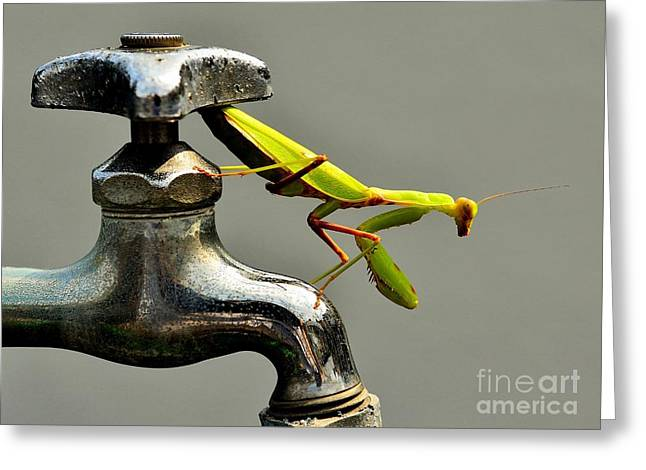 Praying Mantis Greeting Card by Dean Harte