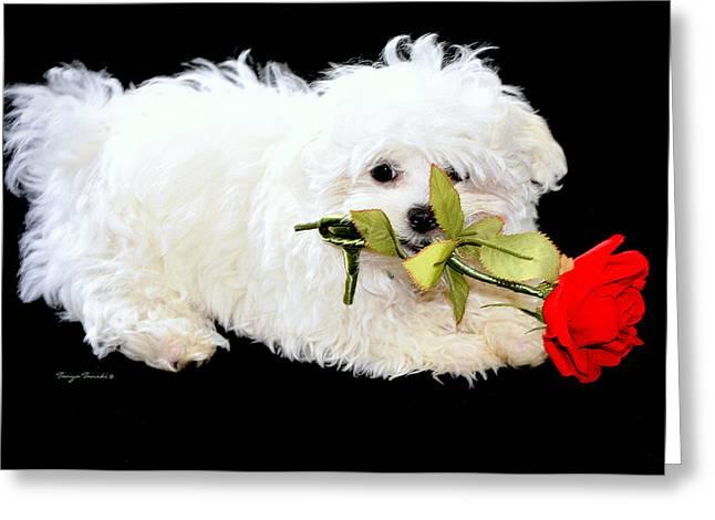 Precious....... Greeting Card by Tanya Tanski