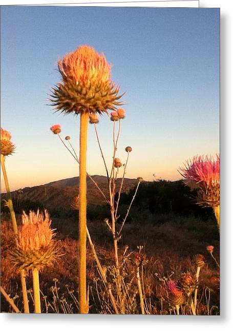 Wildfowers Greeting Cards - Prickly Greeting Card by Skye Zambrana