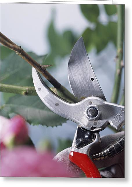 Wood Cutting Tools Greeting Cards - Pruning Scissors Greeting Card by Sheila Terry