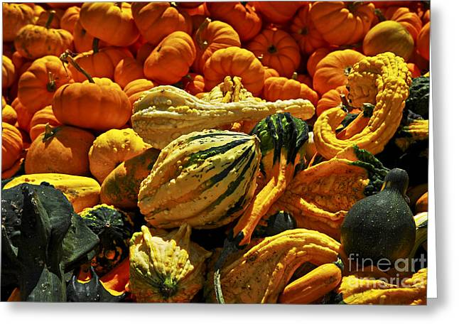 Pumpkins and gourds Greeting Card by Elena Elisseeva
