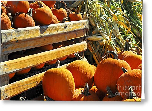 Creating Greeting Cards - Pumpkins Greeting Card by Elena Elisseeva