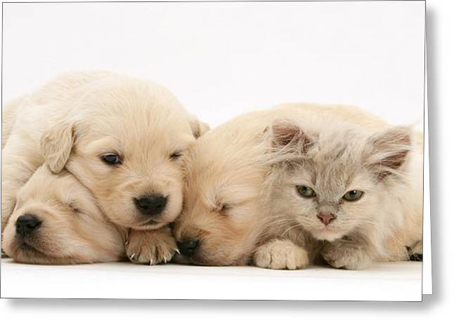 Bred Greeting Cards - Puppies And Kitten Greeting Card by Jane Burton