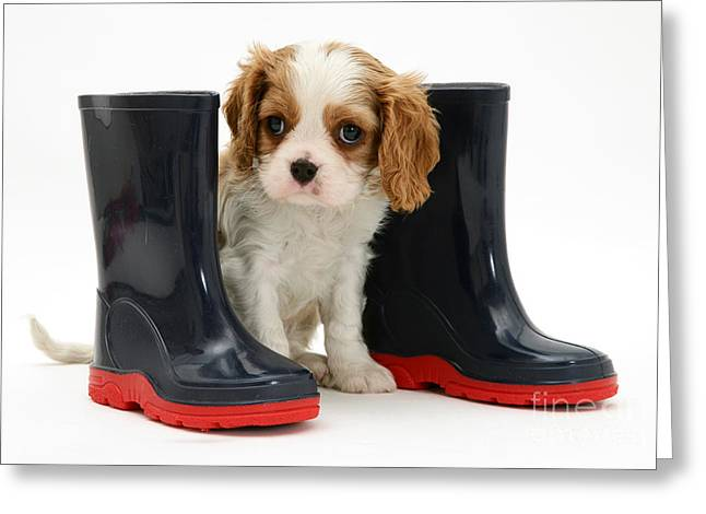 Wellie Greeting Cards - Puppy With Rain Boots Greeting Card by Jane Burton