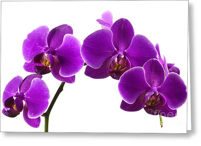 Tropical Gardens Greeting Cards - Purple orchids Greeting Card by Blink Images