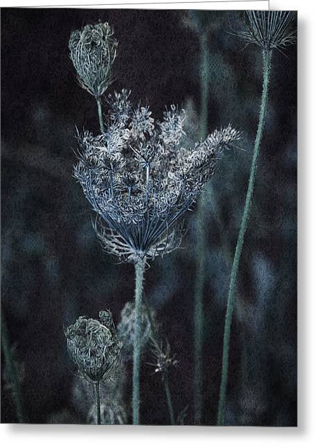 Mixed Media Photo Greeting Cards - Queen Annes Lace Greeting Card by Bonnie Bruno