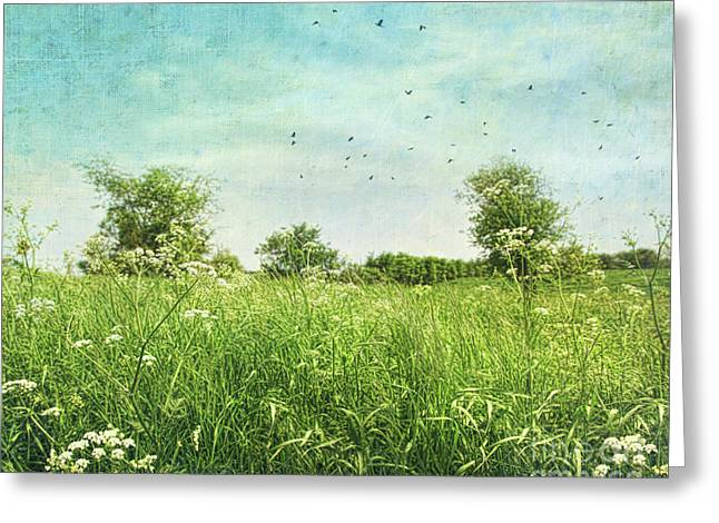 Queen anne's lace wildflowers Greeting Card by Sandra Cunningham