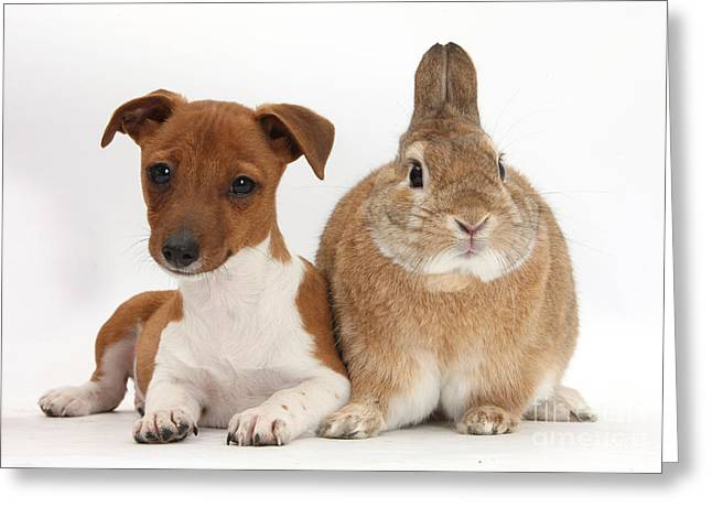 Mixed Species Greeting Cards - Rabbit And Puppy Greeting Card by Mark Taylor