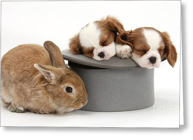 Sleeping Baby Animal Greeting Cards - Rabbit And Spaniel Pups Greeting Card by Mark Taylor