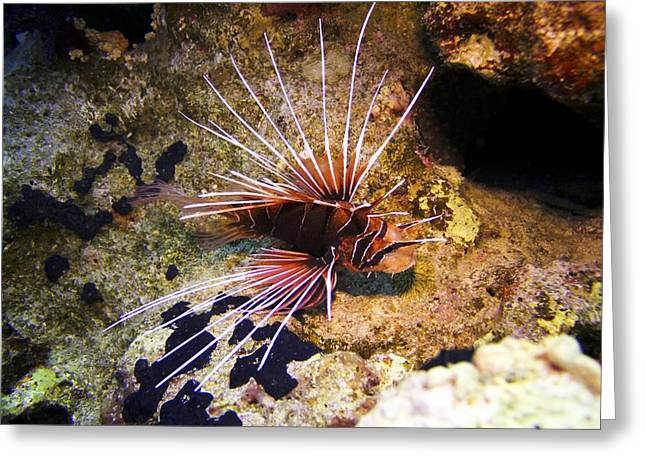 Radial Greeting Cards - Radial Lionfish Greeting Card by Dimitris Neroulias