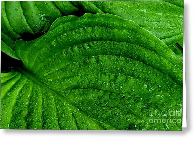 Color Green Greeting Cards - Raindrops on Leaf Greeting Card by Thomas R Fletcher