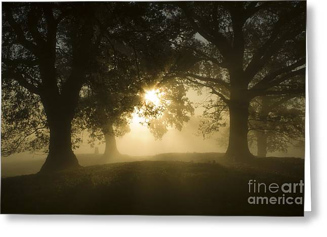 Oak Hill Greeting Cards - Rays of gold Greeting Card by Angel  Tarantella