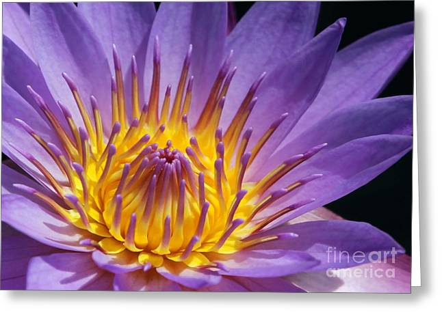 Water Garden Greeting Cards - Reaching for the Sun Greeting Card by Sabrina L Ryan