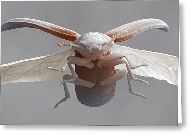 Flour Greeting Cards - Red Flour Beetle In Flight Greeting Card by Power And Syred