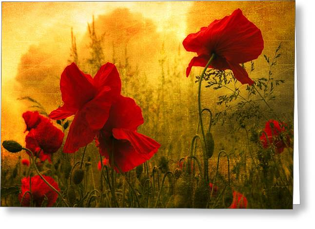 Poppy Photographs Greeting Cards - Red For Love Greeting Card by Philippe Sainte-Laudy