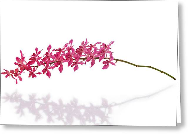 Brightly Lit Greeting Cards - Red Orchid Greeting Card by Atiketta Sangasaeng
