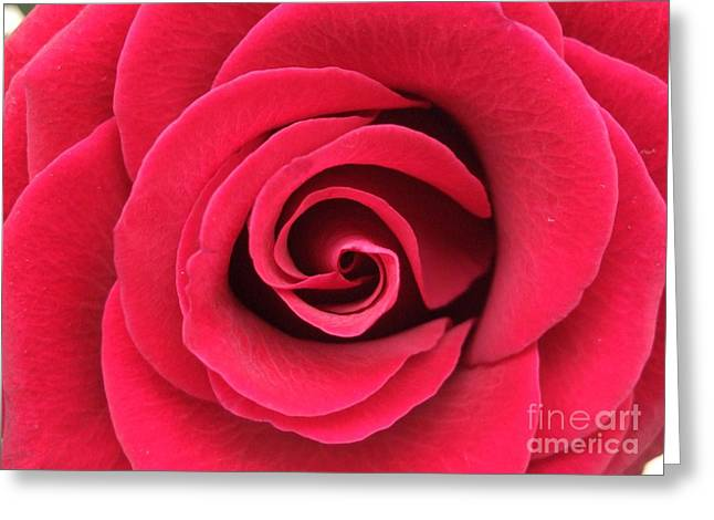 Valentine Greeting Cards - Red Rose Greeting Card by Deborah Brewer