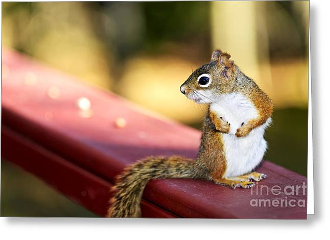 Squirrels Greeting Cards - Red squirrel on railing Greeting Card by Elena Elisseeva