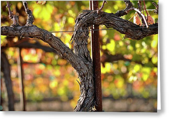 Grapevine Autumn Leaf Greeting Cards - Red Wine Vine Greeting Card by Brandon Bourdages