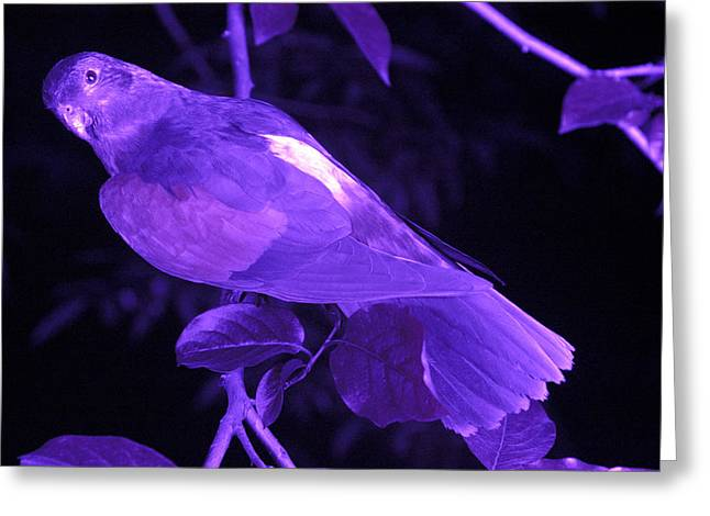 Ultraviolet Greeting Cards - Red-winged Parrot Greeting Card by Volker Steger