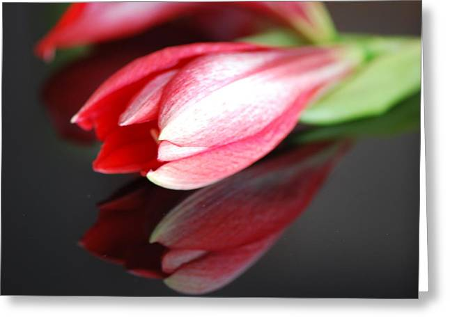 Bouquet Amaryllis Greeting Cards - Reflection Greeting Card by Lisa  DiFruscio