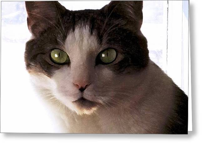 Photos Of Cats Digital Greeting Cards - Reggie Greeting Card by Dale   Ford