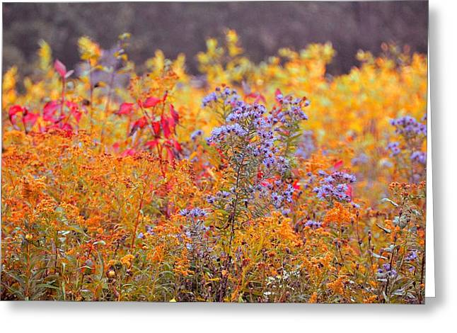 Cazenovia Greeting Cards - Rich Colors Of Autumn Greeting Card by JAMART Photography