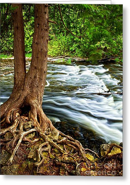 Trunk Greeting Cards - River through woods Greeting Card by Elena Elisseeva