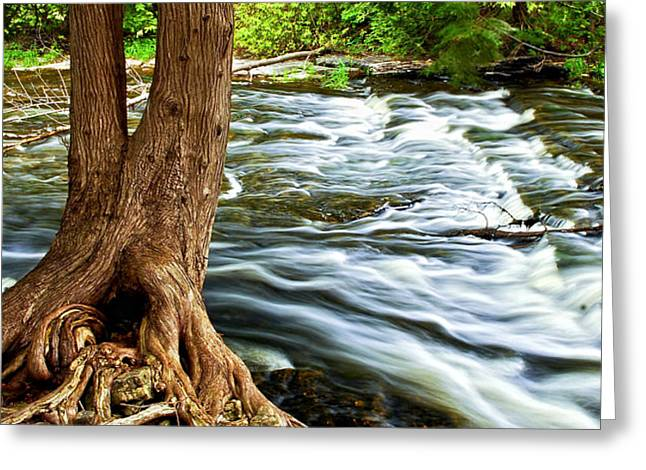 River through woods Greeting Card by Elena Elisseeva