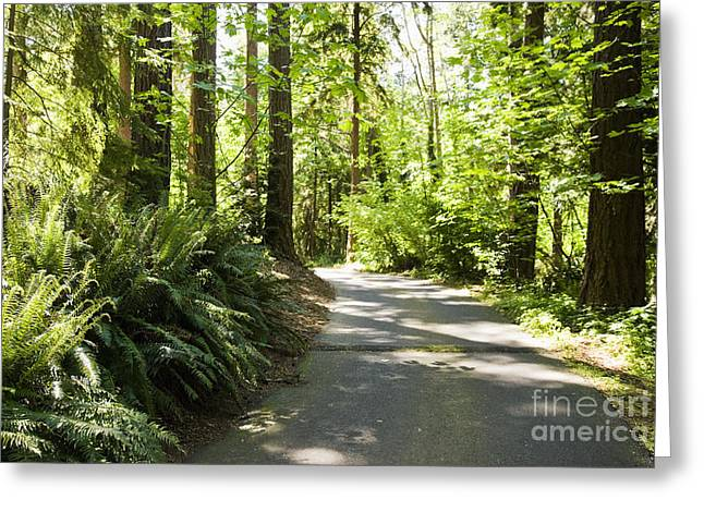Backwoods Greeting Cards - Road in Forest Greeting Card by Andersen Ross