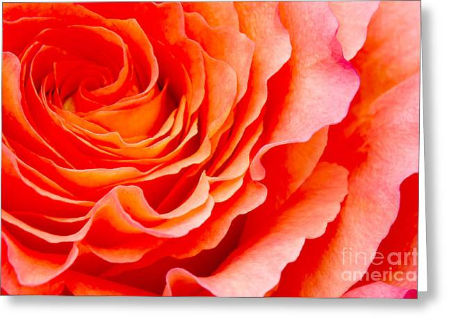 Orange Rose Greeting Cards - Rose Greeting Card by Angela Doelling AD DESIGN Photo and PhotoArt
