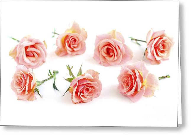 Lies Greeting Cards - Rose blossoms Greeting Card by Elena Elisseeva