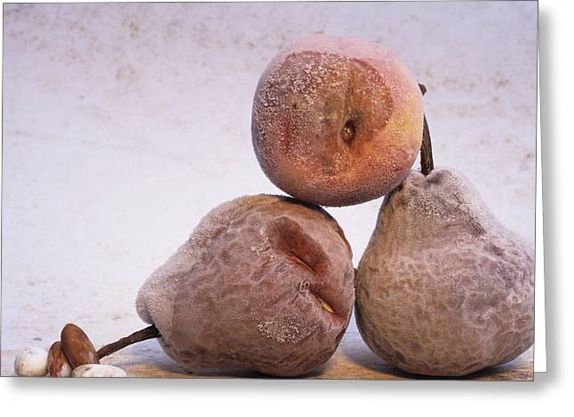 Rotten pears and apple. Greeting Card by BERNARD JAUBERT