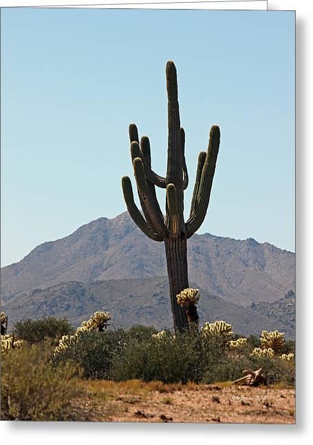 Giclee Cactus Greeting Cards - Saguaro Scenic III Greeting Card by Suzanne Gaff
