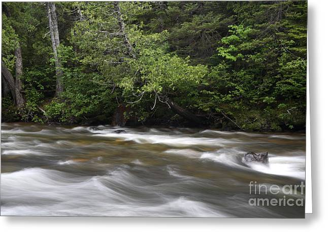 Streambed Greeting Cards - Sainte-anne River, Quebec Greeting Card by Ted Kinsman