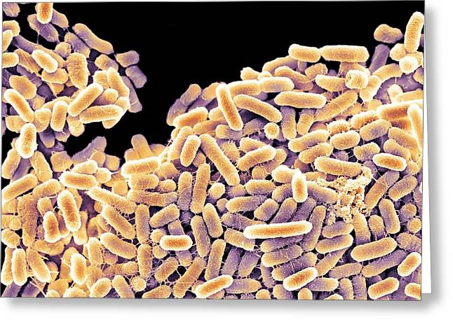 Microbiological Greeting Cards - Salmonella Bacteria, Sem Greeting Card by
