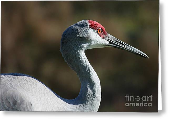 Sandhill Cranes Greeting Cards - Sandhill Crane Profile Greeting Card by Carol Groenen