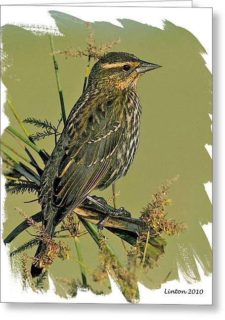 Sparrow Greeting Cards - Savannah Sparrow Greeting Card by Larry Linton